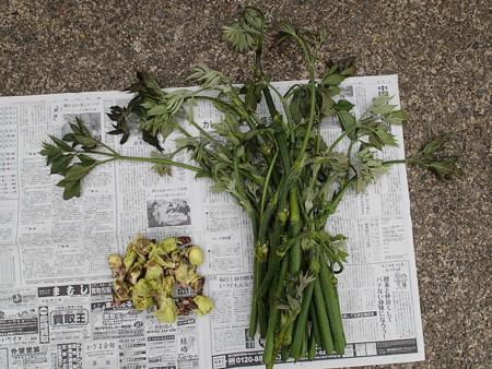 2015/05/23の収穫
