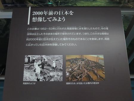 魚津埋没林博物館 埋没林について