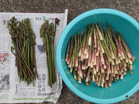 2016/05/19の収穫