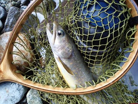 parmarkさんが釣り上げた端正な大岩魚さんのお顔