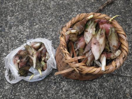 2016/09/10の収穫