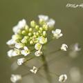 Photos: 今朝の庭先118_rs