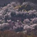 花見山全景