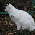 写真: 釣り場の白猫