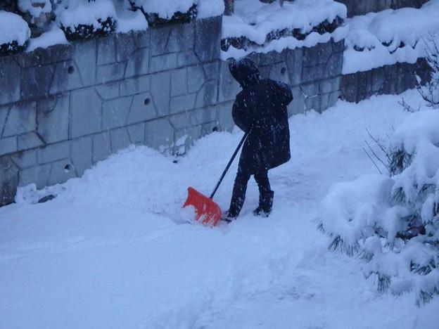 家内の雪かき
