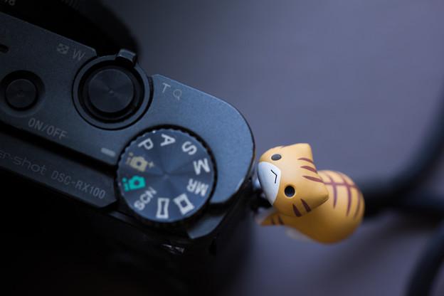 写真: 第109回モノコン カメラとネコ