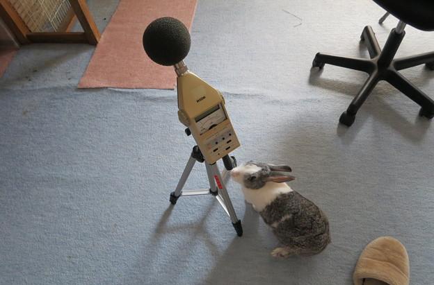 うさぎと騒音計