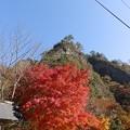 11月16日「紅葉」