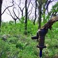 森のポンプ