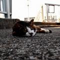 Photos: 池島猫