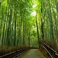京都の寺院やその庭園には中国の唐時代の芸術様式が受け継がれているが、中国メディアの中国網はこのほど、とっくに廃墟と化した唐の洛陽と違い、京都において唐の芸術様式を体現する寺院や庭園が現在に至るまで受け継がれてきたのはなぜかと疑問を投げかける記事を掲載した。