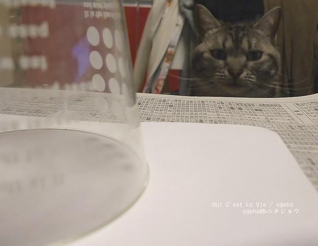 Photos: あたしの獲物…。(狙う猫)
