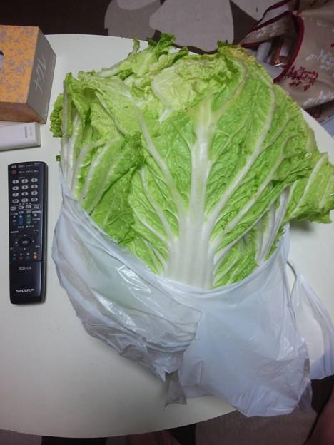 白菜200円