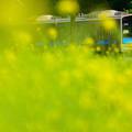 Photos: 四年目の春