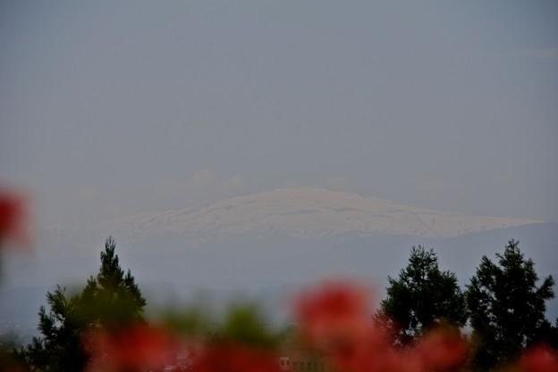 躑躅と月山