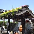 写真: 鯉艸郷