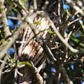 Photos: 可愛い鳥さん