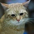 写真: 2009年03月06日の茶トラのボクチン(4歳)