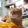 写真: 2010年03月06日の茶トラのボクチン(5歳)