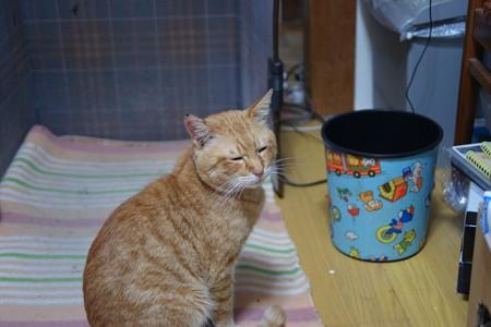 2010年03月15日の茶トラのボクチン(5歳)