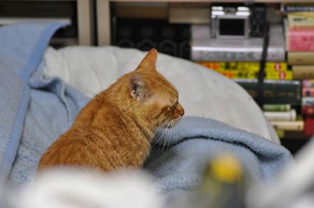 2011年03月17日の茶トラのボクチン(6歳)