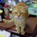写真: 2011年03月23日の茶トラのボクチン(6歳半)