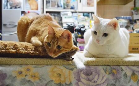 2015年4月26日のトラちゃん(1歳半)とシロちゃん(2歳)