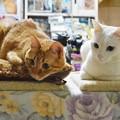 写真: 2015年4月26日のトラちゃん(1歳半)とシロちゃん(2歳)