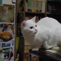 写真: 2015年5月18日のシロちゃん(2歳)