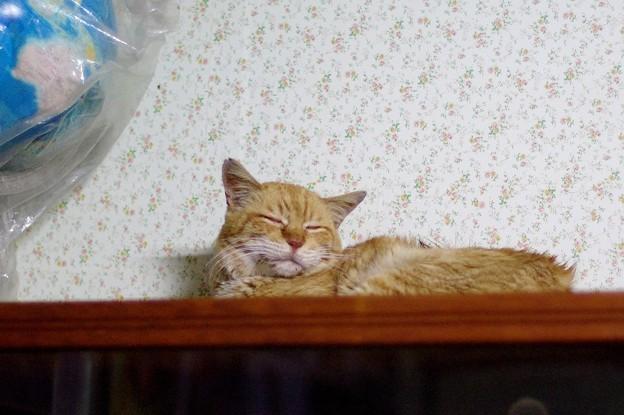 写真: 2012年05月21日の茶トラのボクチン(8歳)
