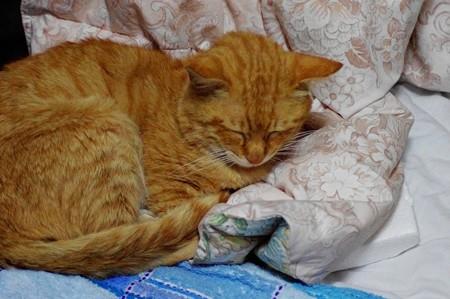 2010年05月28日の茶トラのボクチン(6歳)