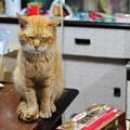 2010年05月31日の茶トラのボクチン(6歳)
