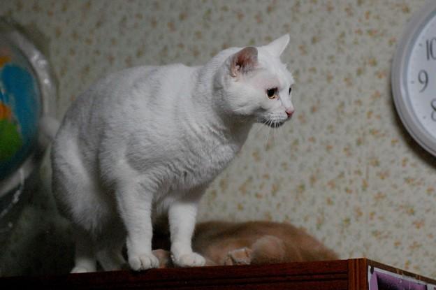 写真: 2016年10月12日のシロちゃん(メス3歳)
