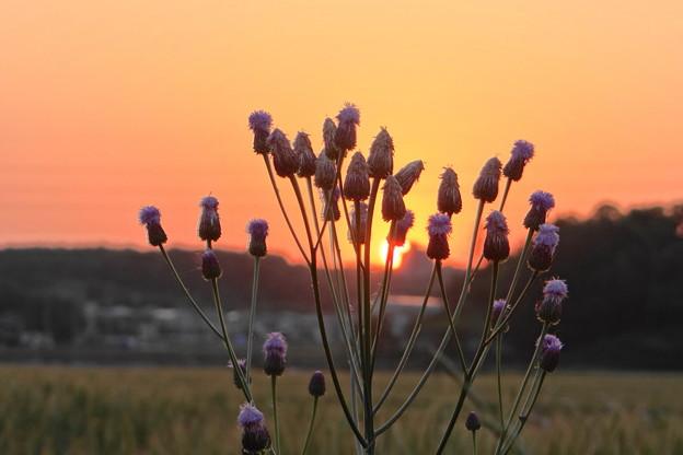 路傍の夕陽