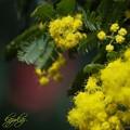 輝ける黄色い花