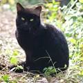 写真: Black Cat
