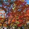 写真: 長瀞にて2