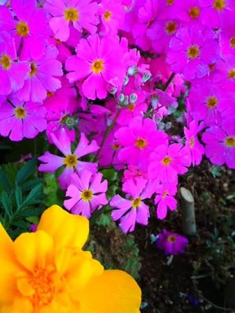春の花 寄せ植え2