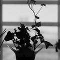 Photos: 窓辺