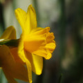 写真: 春色6