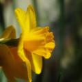 Photos: 春色6