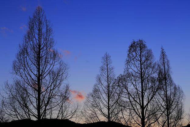 写真: 冬晴れの日暮