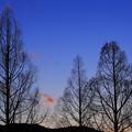 Photos: 冬晴れの日暮