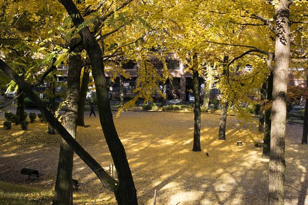 黄色いじゅうたん
