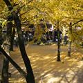 写真: 黄色いじゅうたん