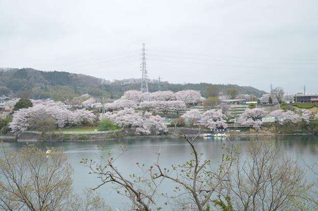 Photos: DSC_0077