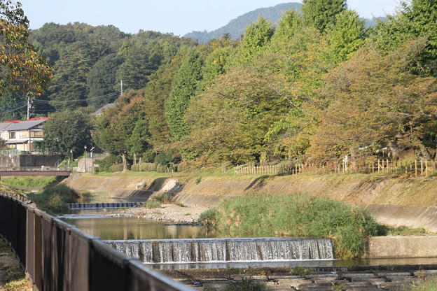 南浅川の秋