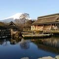写真: 忍野山あり木あり池あり