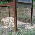 写真: 檻罠のエサ設置
