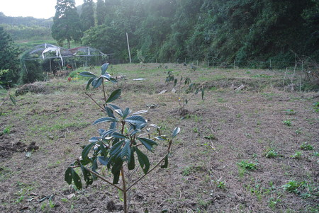 芝口の苗木植え付け